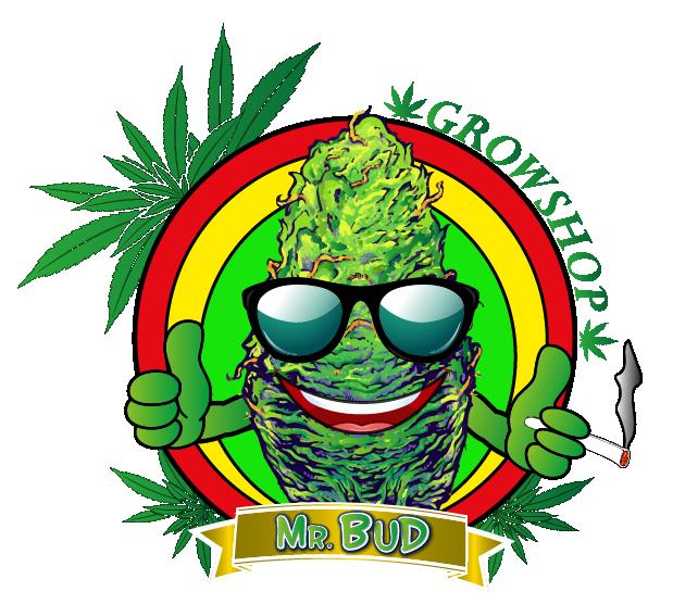 Mr.Bud